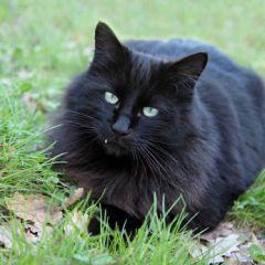 Images pour vos chats E79f0f10