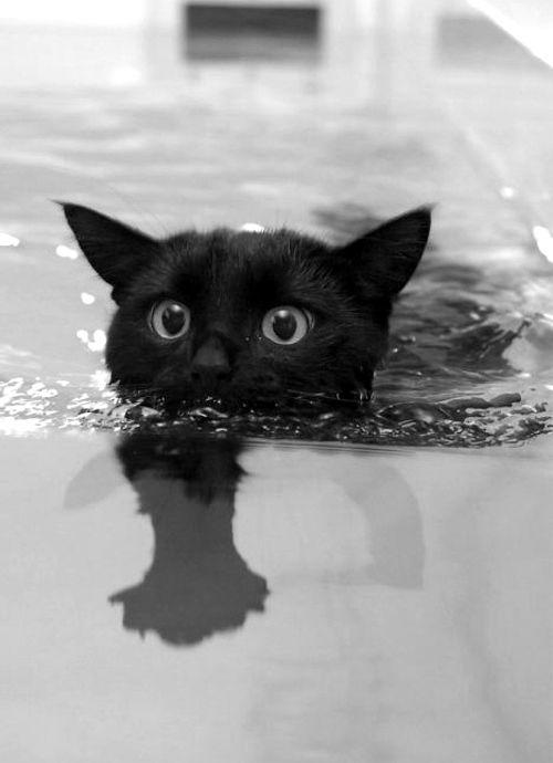 Images pour vos chats F449d610