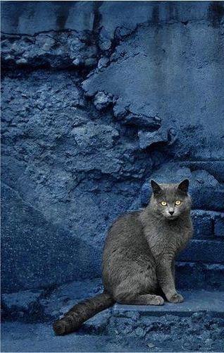 Images pour vos chats Fad67a10