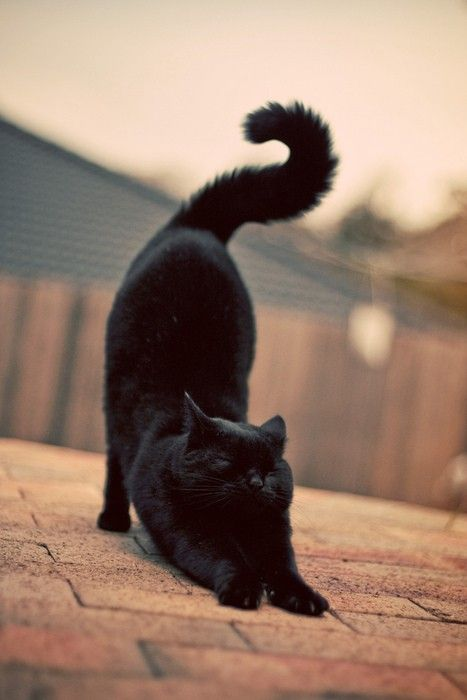 Images pour vos chats Fd04d010