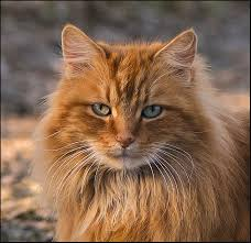 Images pour vos chats Images10