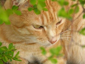 Images pour vos chats Roukin10