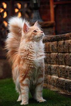 Images pour vos chats S10
