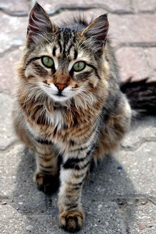 Images pour vos chats Uvhgoi10