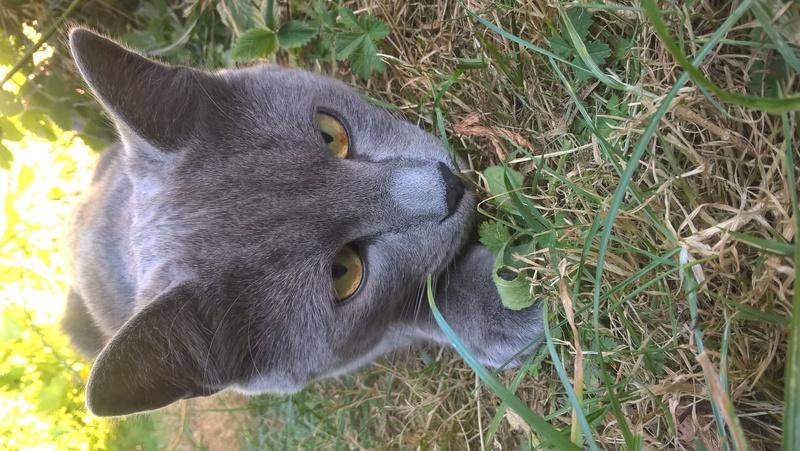 Images pour vos chats Wp_20110