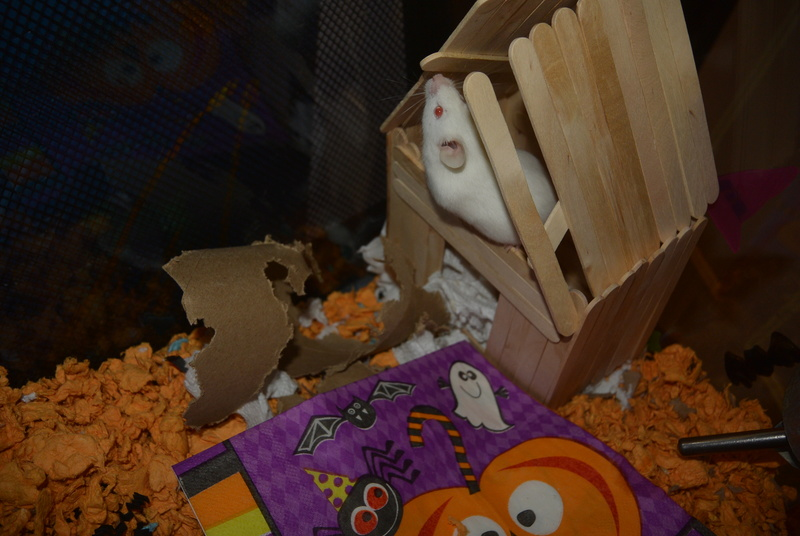 Halloween Mouse Cage In the Works! Dsc_1211