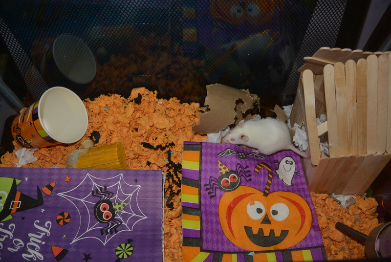 Halloween Mouse Cage In the Works! Dsc_1212