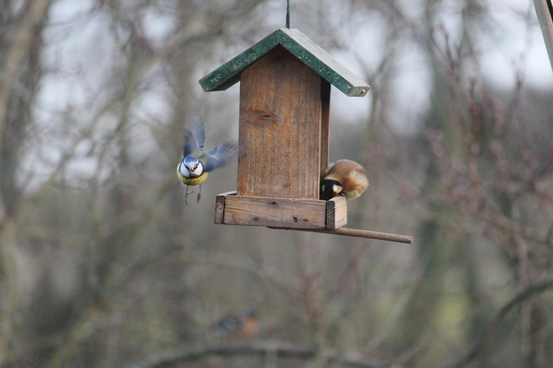 Petits oiseaux  Sister13