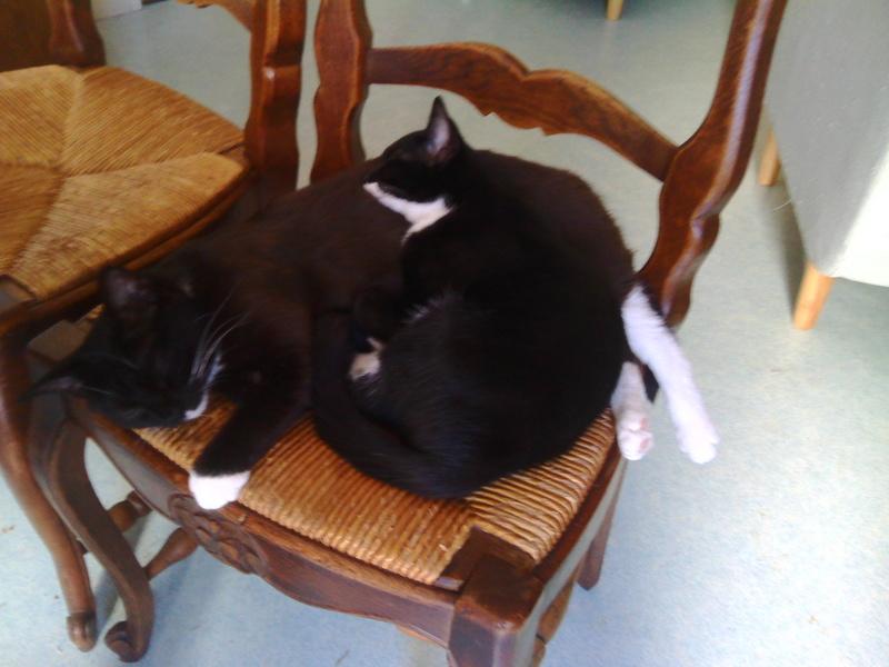 monello - Monello, chaton européen noir et blanc, né en mai 2016 Img_2011