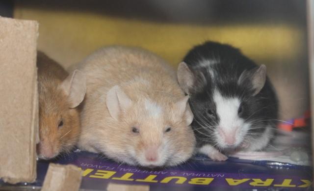 Sleepy Mice <3 Img_0521