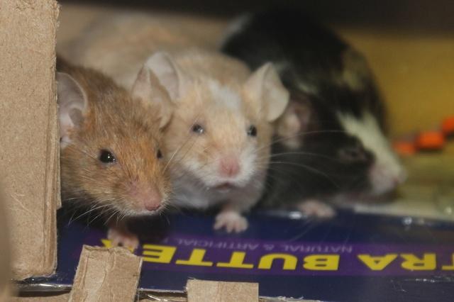Sleepy Mice <3 Img_0522