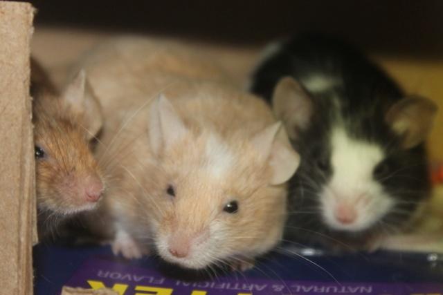 Sleepy Mice <3 Img_0523