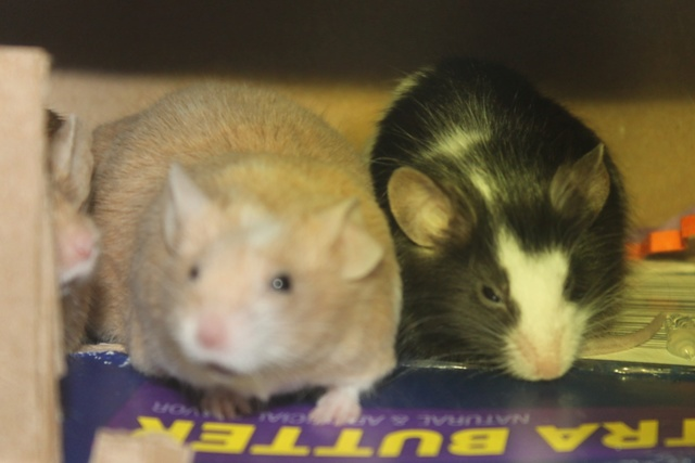 Sleepy Mice <3 Img_0524