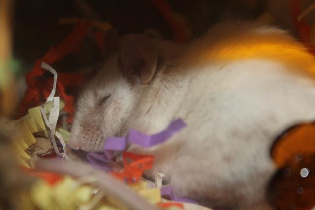Sleepy Mice <3 Img_0525
