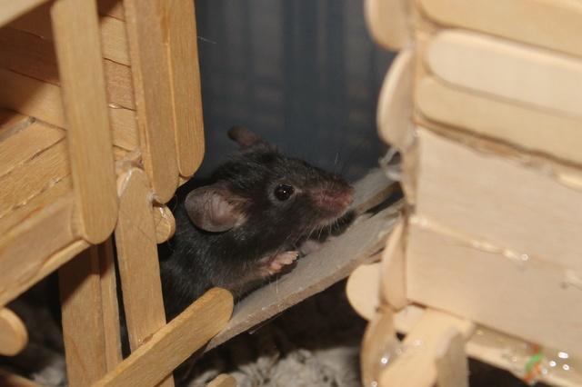 Sleepy Mice <3 Img_0610
