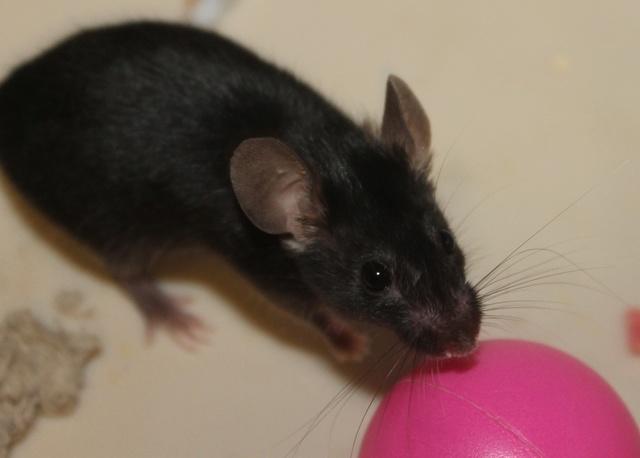 Sleepy Mice <3 Img_0611