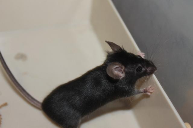 Sleepy Mice <3 Img_0612