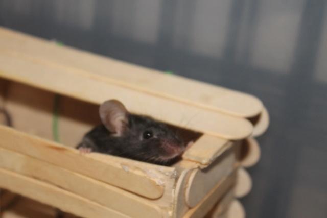 Sleepy Mice <3 Img_0613