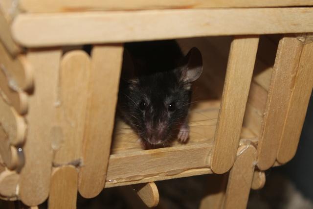 Sleepy Mice <3 Img_0614
