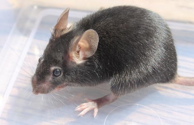 Sleepy Mice <3 Img_9828