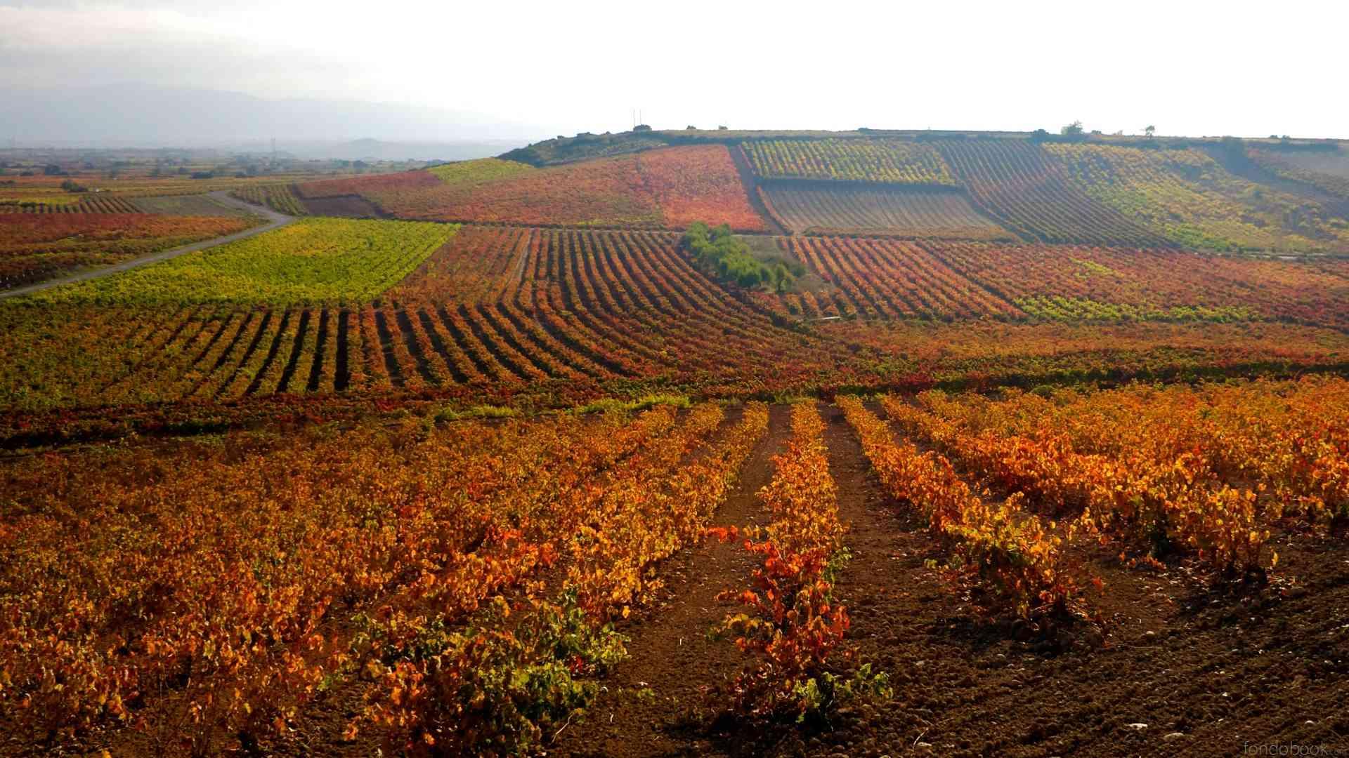 La Rioja  - Página 4 Fb_hd110
