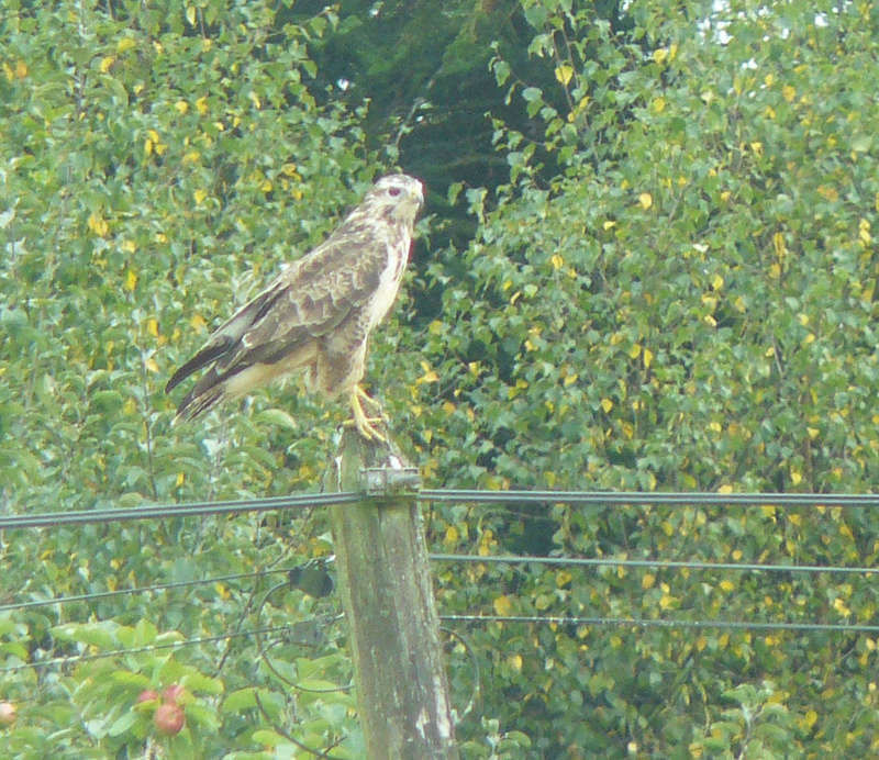 Buse variable blanche Buse_v10