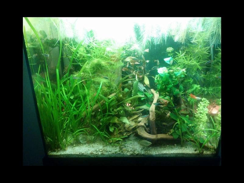 95L Biotope Asiatique -> Passé en low tech !! Rps20111