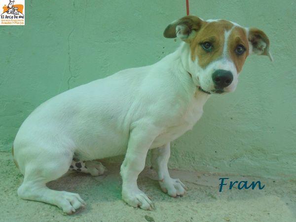 FRAN (devenu MODJO) - CROISE - MÂLE - EN FA DANS LE 75 P1610010