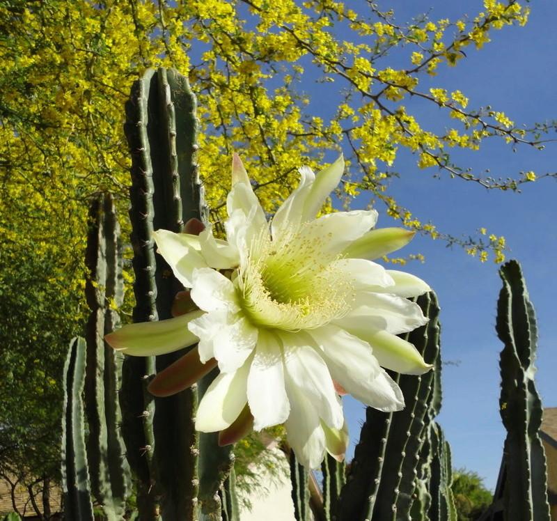 Kaktusi - Page 3 001-110