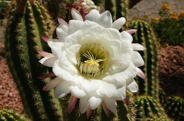 Kaktusi - Page 3 04131010