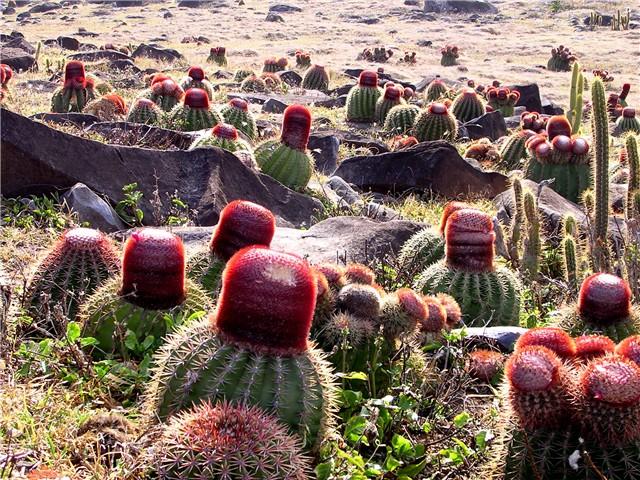 Kaktusi - Page 3 08000e10