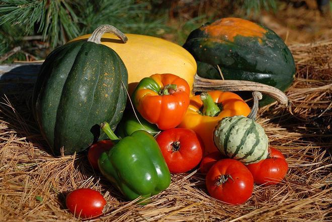 Povrće - Page 2 13182410
