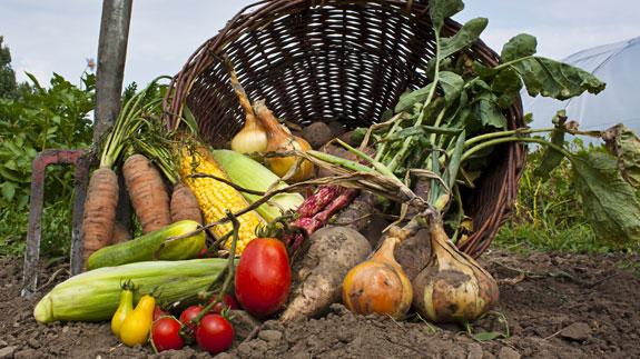 Povrće - Page 2 13958210