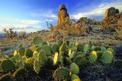 Kaktusi - Page 3 Cactus25