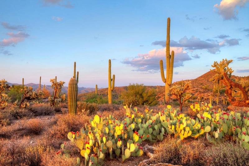 Kaktusi - Page 3 Desert14