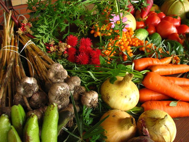 Povrće - Page 2 Ecolog10
