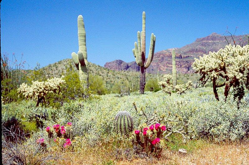 Kaktusi - Page 3 Image210