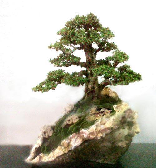 Bonsai Kian-s10