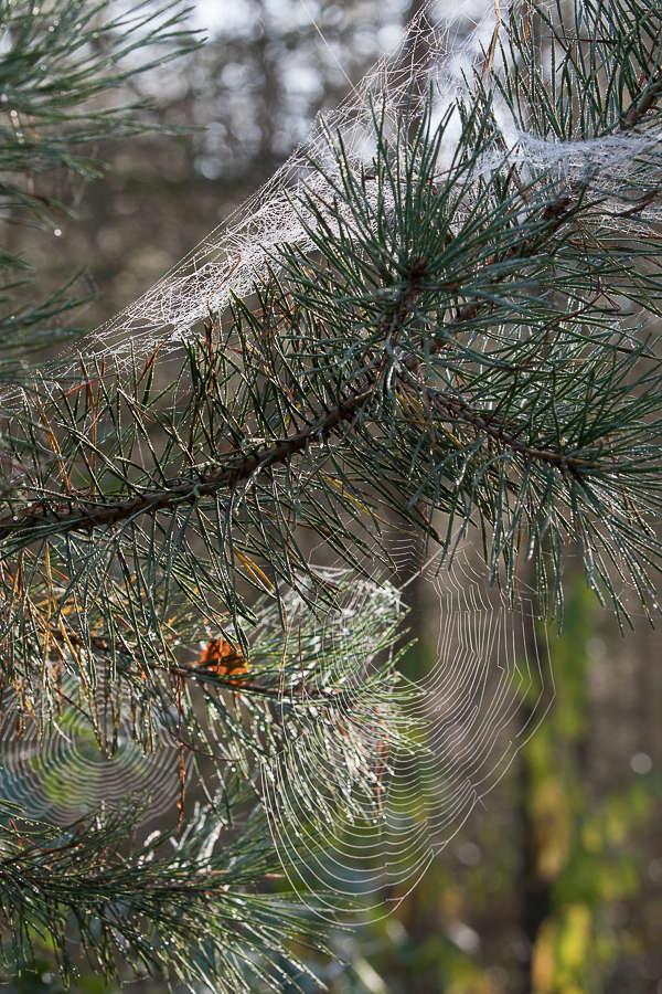 il n'y a pas que des champignons en forêt... _88a0245