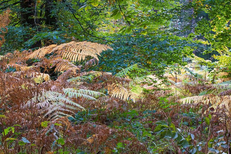 il n'y a pas que des champignons en forêt... _88a0340