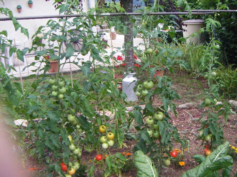 Mon ti jardinet  Poule_12