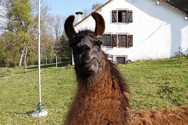 Lamas Dscf0611