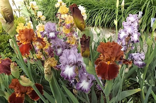 Iris 'Rustler' - Keith Keppel 1987 Rustle10