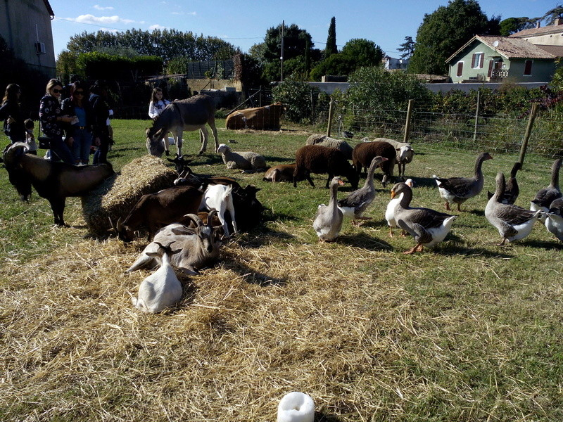 CHUSCLAN(Gard) Fête des vendanges 2016 - Page 2 Img_2357