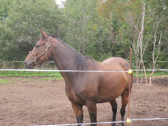 Râpage ( limage) des dents des chevaux P9170010