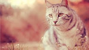 Daisy's Cats :: DO NOT DELETE Heathe10