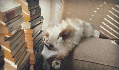 Daisy's Cats :: DO NOT DELETE Lazy_k10