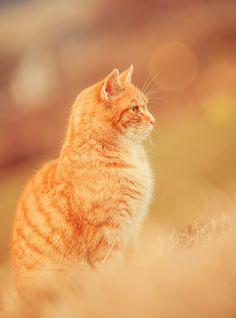 Daisy's Cats :: DO NOT DELETE Pretty10