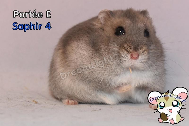 Photos de vos hamsters russes  13391510