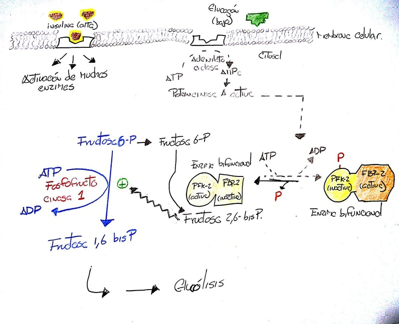 Unidad-II: Metabolismo de los Hidratos de carbono (12-19 sept-16) Whatsa10